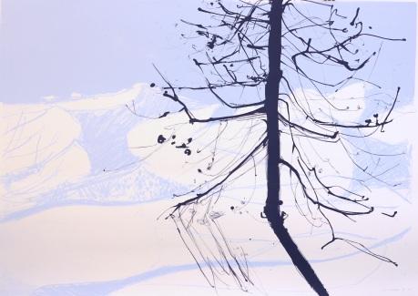 mountain shadows and tree